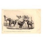 Original Postcard Barnum And Bailey No1
